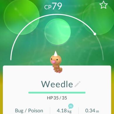 Weedle - Pokémon Go