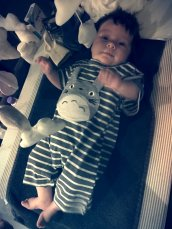 Totoro Baby